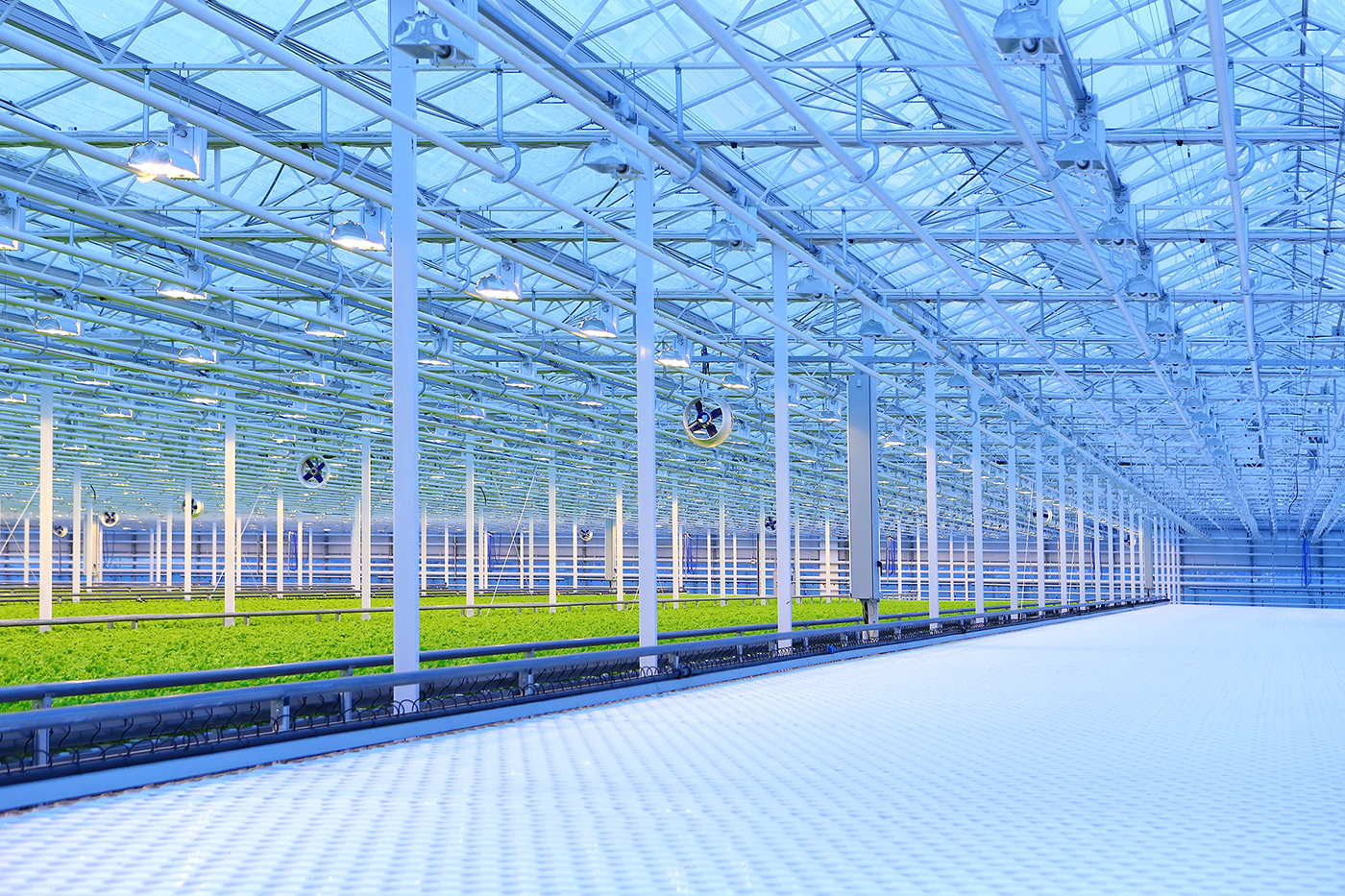 Inside of a Professional Greenhouse with Fans and Lights and Crops