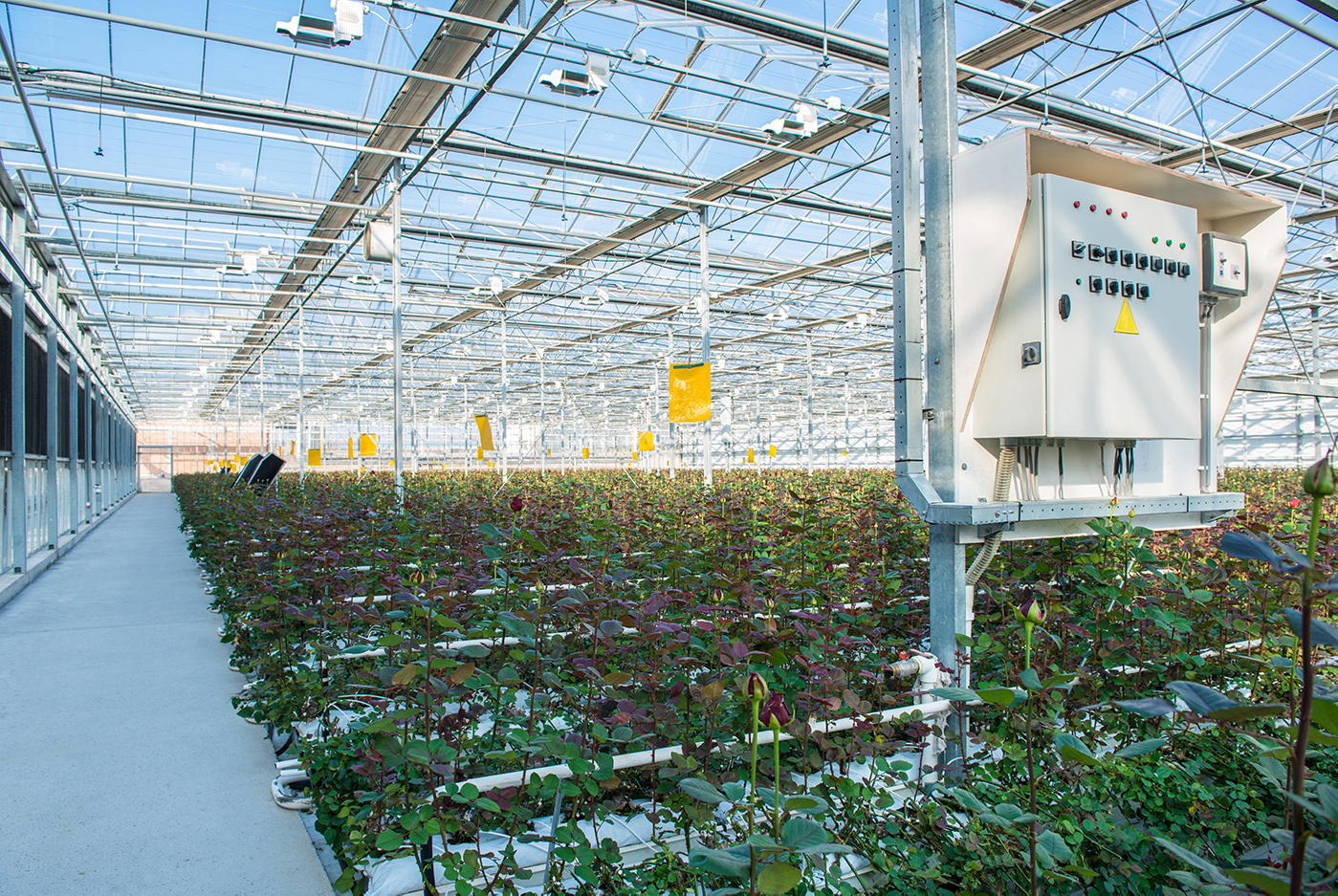 A Commercial Growing Controller System inside a Professional Greenhouse