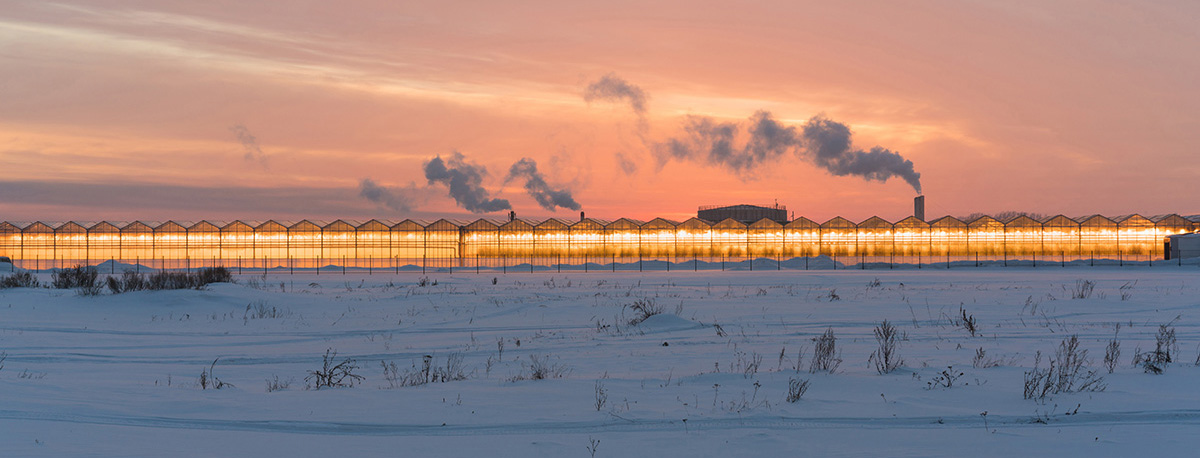 Outdoor Photo of Professional Greenhouses with dramatic lighting and sunset showing snow on the ground