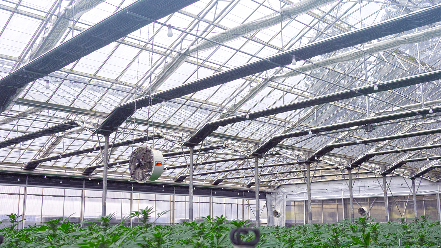Vents and Fans and Marijuana Grow