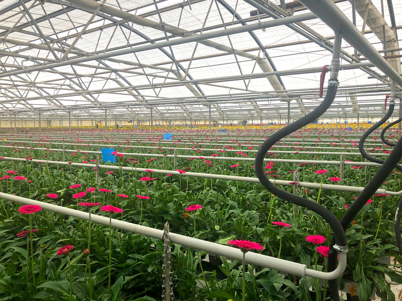Hot water heating in a greenhouse of flowers