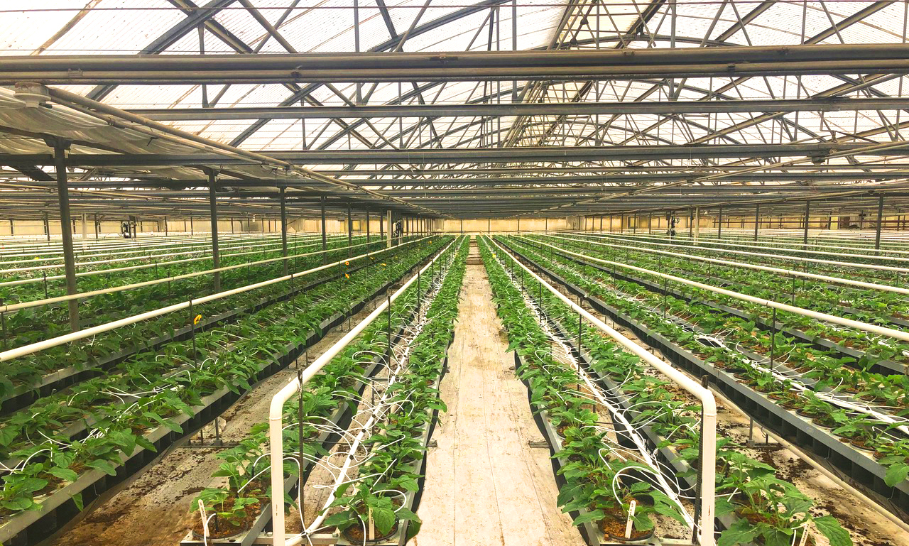 Hydro Heating in a commercial Greenhouse