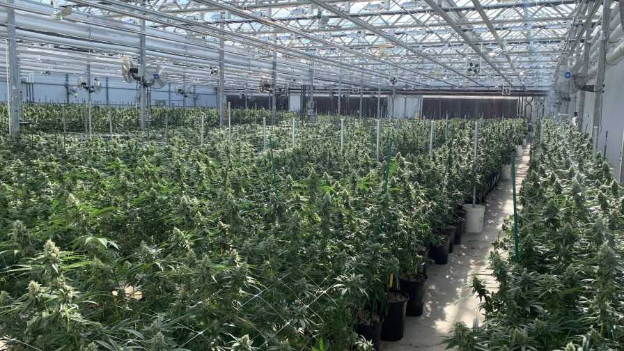 Customer: How ForwardGro Found a New Way to Grow with Cannabis