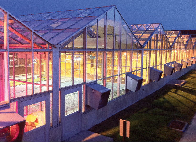 Lights in a Glass Greenhouse