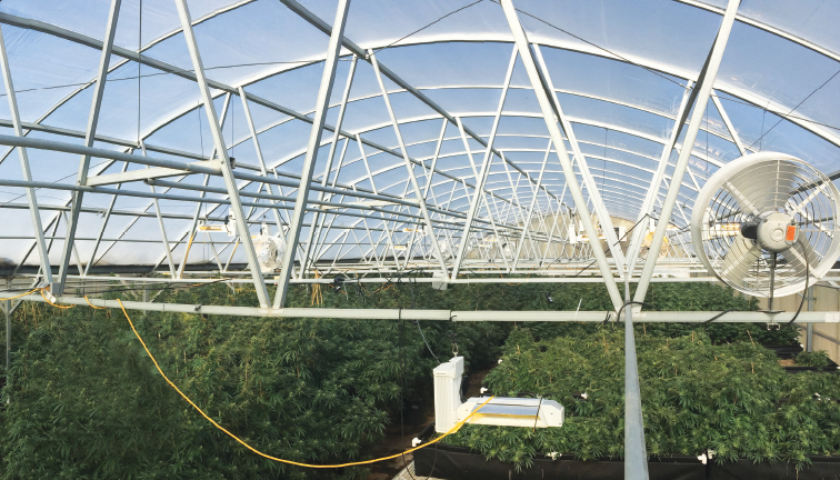 Cannabis Greenhouse Ventilation: Natural or Mechanical?