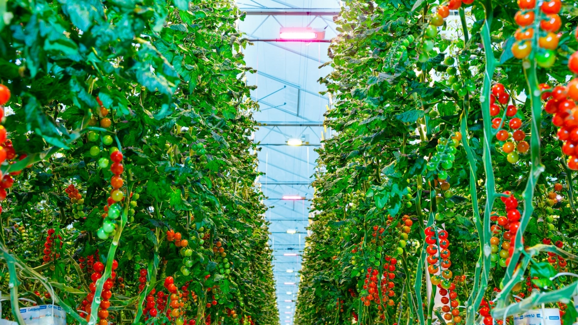 Greenhouses as a Solution to Food Bank Crisis