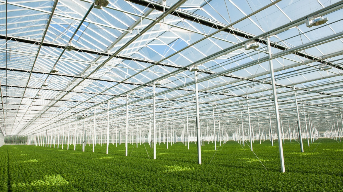 Three Steps for More Light into Your Greenhouse
