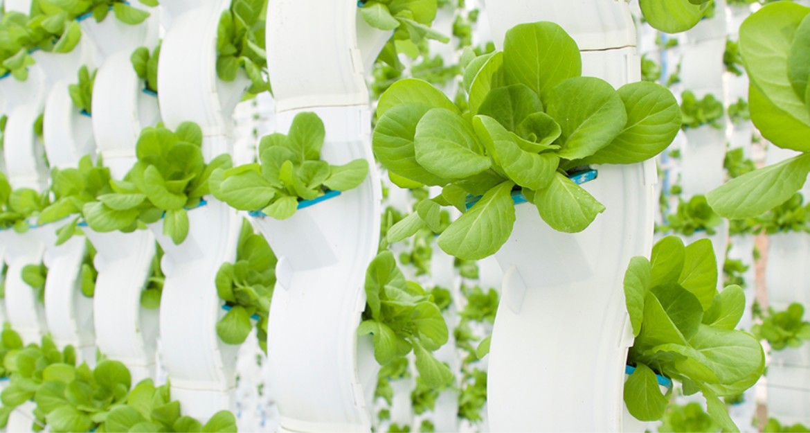 In Control Of Crop Transpiration