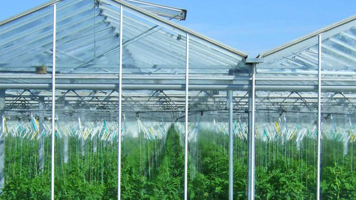 Market Potential and Investment Opportunities of High-tech Greenhouse Vegetable Production in the USA