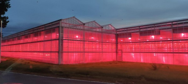 Grower gains precision using supplemental grow lights