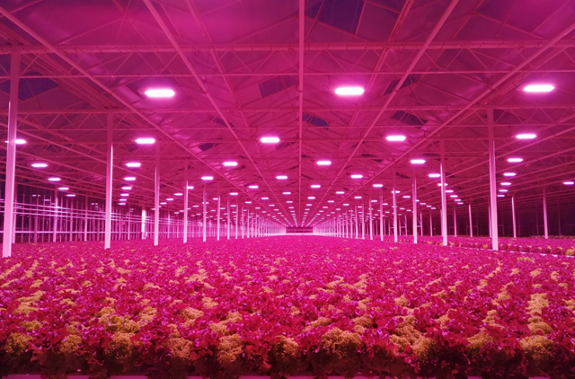 Full LED Lighting Solution Offers Increased Production and Faster Growth Cycles