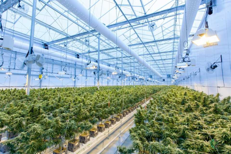 North America's Largest Cannabis Growers for 2021