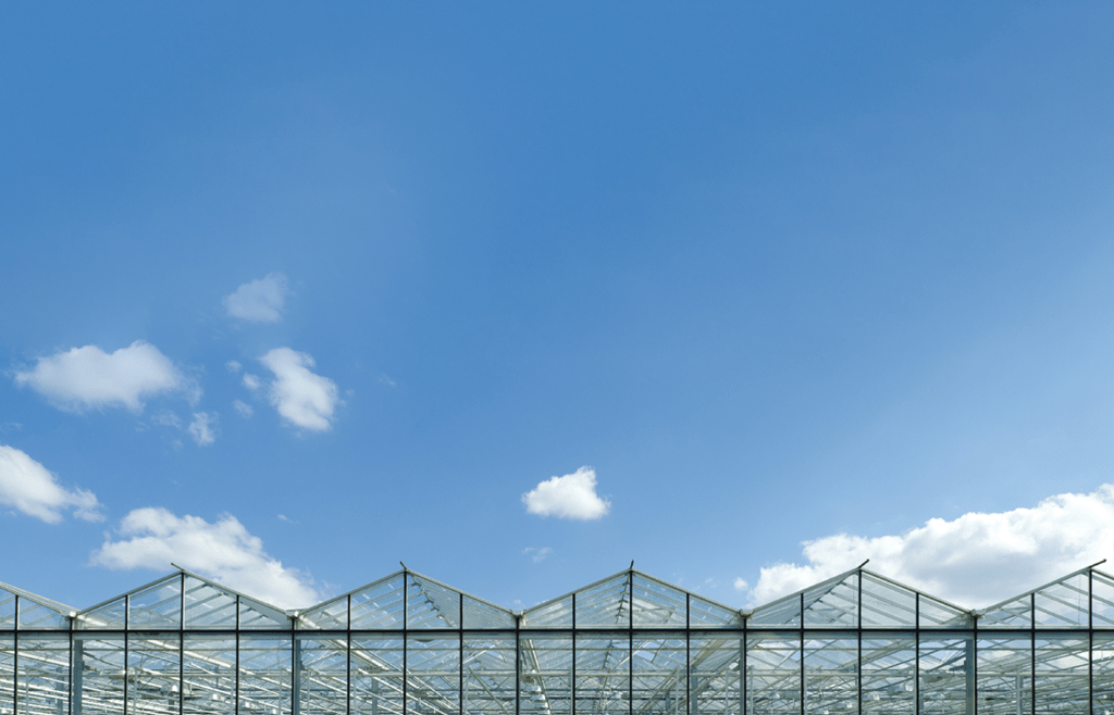 24 Tips to Improve Cannabis Greenhouse Efficiency
