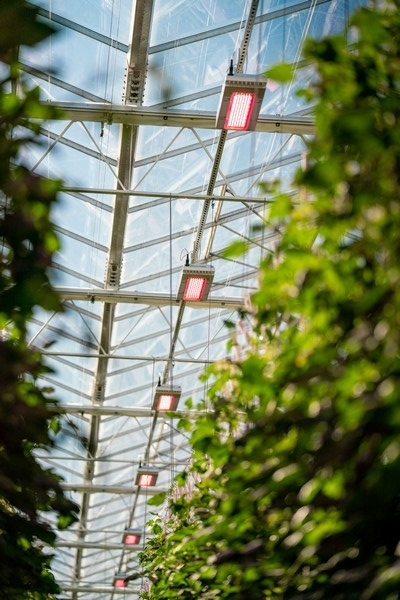 Nursery Grows More Year Round by Using LED Lighting