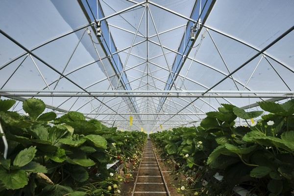 Largest Poly Greenhouse in the Netherlands Equipped with New Drive Technology